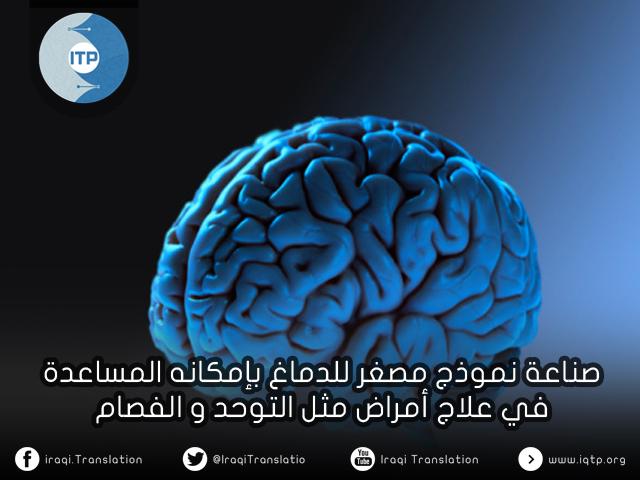 صناعة نموذج مصغر للدماغ بإمكانه المساعدة في علاج أمراض مثل التوحد والفصام