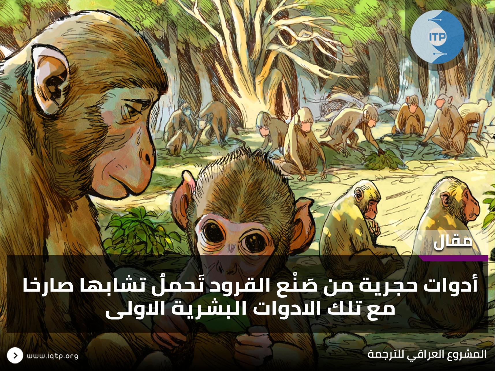 أدوات حجرية من صَنْع القرود تَحملُ تشابها صارخا مع تلك الادوات البشرية الاولى