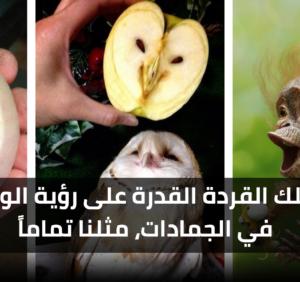 تمتلك القردة القدرة على رؤية الوجوه في الجمادات مثلنا تماماً