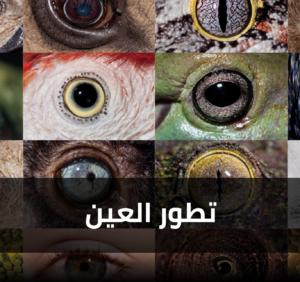 تطور العين